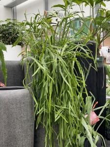 Rehner Gartencenter | Pflanzen