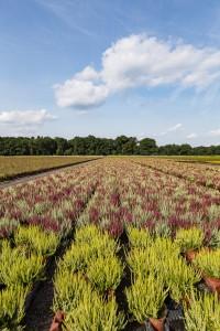 Rehner Gartencenter | Produzenten